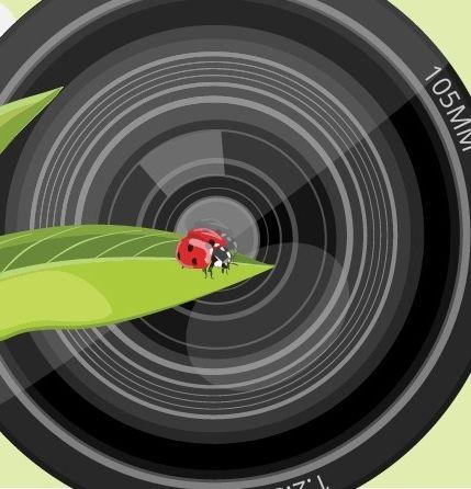 The B&H Macro Lens Buying Guide