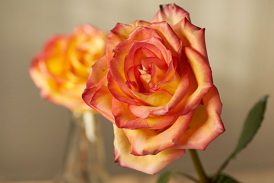 DIY: How to preserve flowers with wax