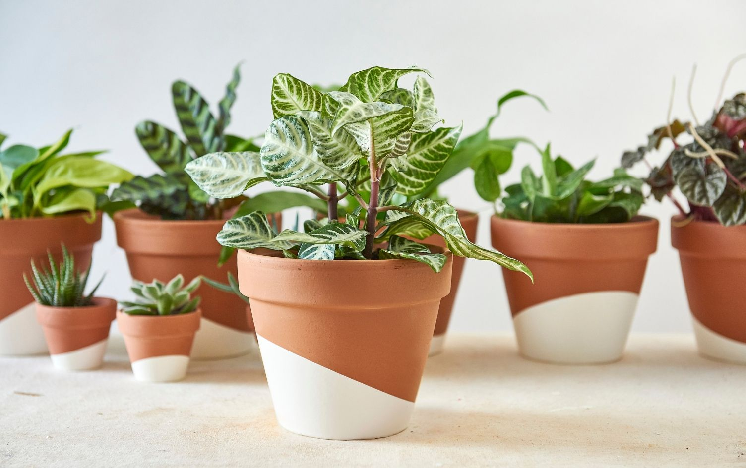 Plants could help make you happy and healthy (says science)